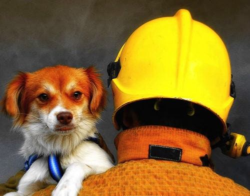 Fire Safety Tips to Protect Your Pets from Harm