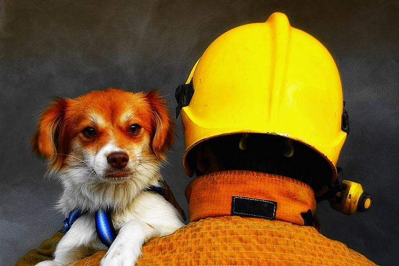 Fireman holding dog